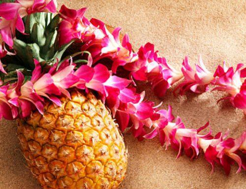 Welcome Back to Maui
