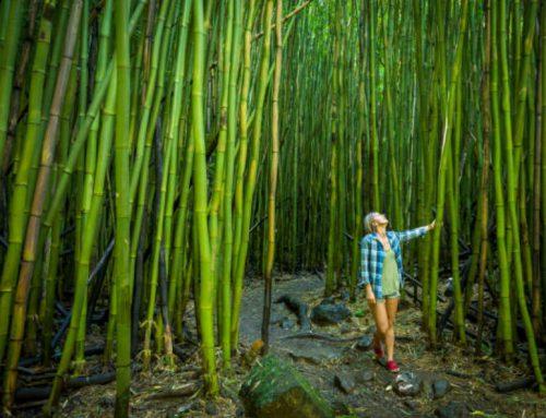 Maui's Best Eco-Friendly Cultural Adventures
